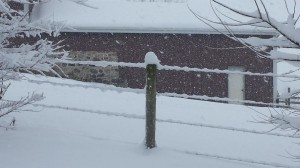 It Snowed So Much - It was Building Up on the Barbed Wire